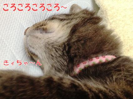 3-1_20121010000233.jpg