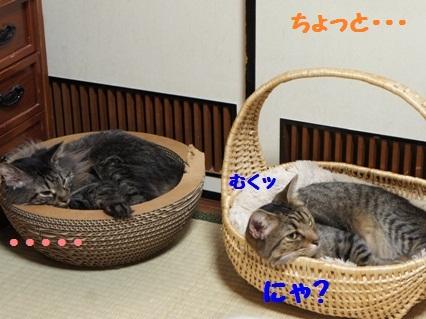 3_20120818182649.jpg