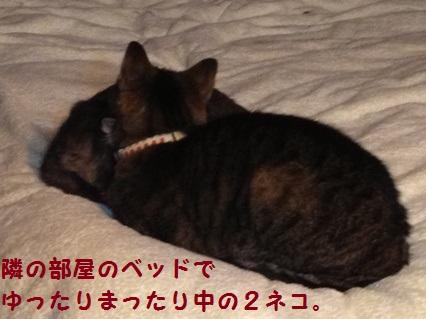 3_20121025165538.jpg