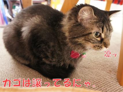 3_20121115233010.jpg