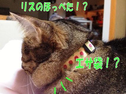3_20121121222912.jpg