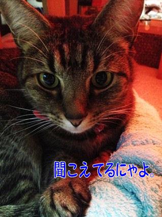 3_20121217201107.jpg