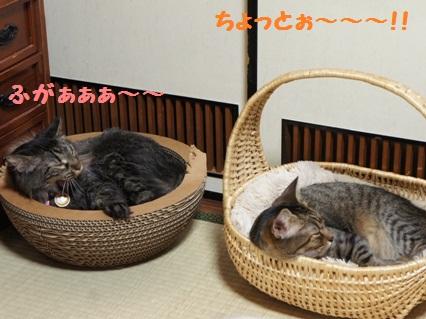 4_20120818182649.jpg