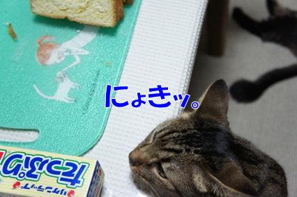 4_20120823181821.jpg