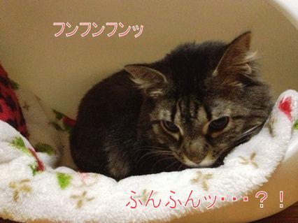 4_20121101215949.jpg
