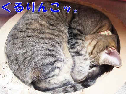 4_20121115233010.jpg