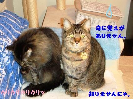 5_20120809191055.jpg