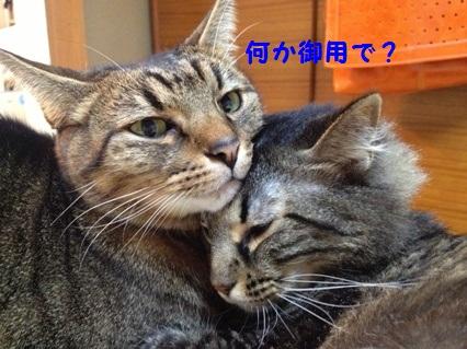 5_20121025165538.jpg