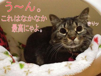 5_20121101215949.jpg
