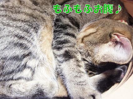 5_20121115233009.jpg