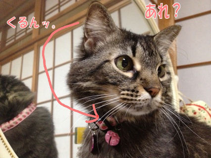 5_20121119223532.jpg