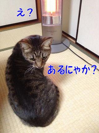 5_20121222235914.jpg