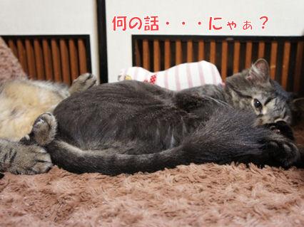 6_20120925222512.jpg
