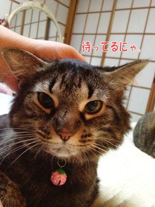 6_20121010000311.jpg