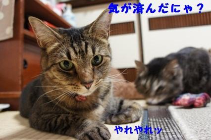 6_20121024171806.jpg