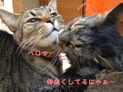 6_20121025165538.jpg