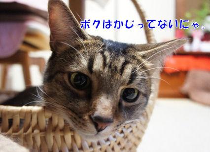 6_20121112003648.jpg