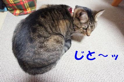 6_20121113230733.jpg