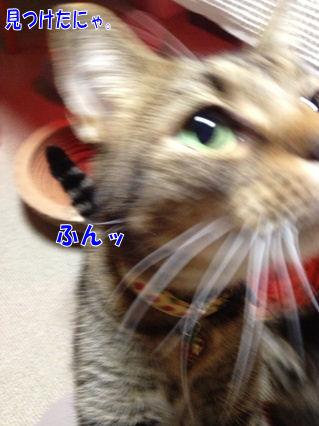 6_20121123002350.jpg