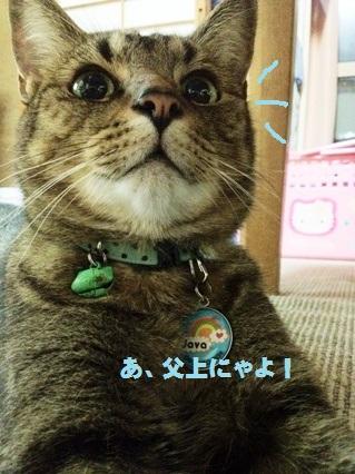 7_20120807161236.jpg