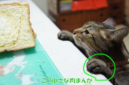 7_20120823181904.jpg