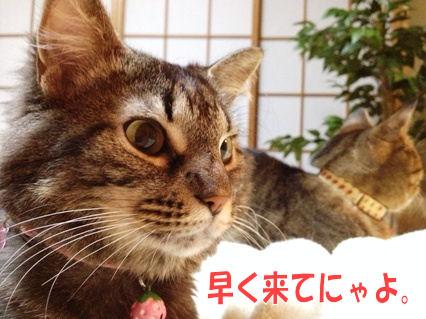 7_20121010000311.jpg