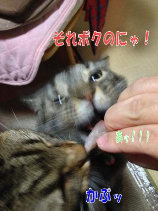 8_20121127184808.jpg