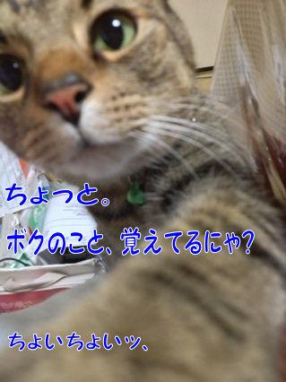 8_20130114230313.jpg