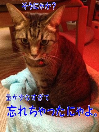9_20121217201333.jpg