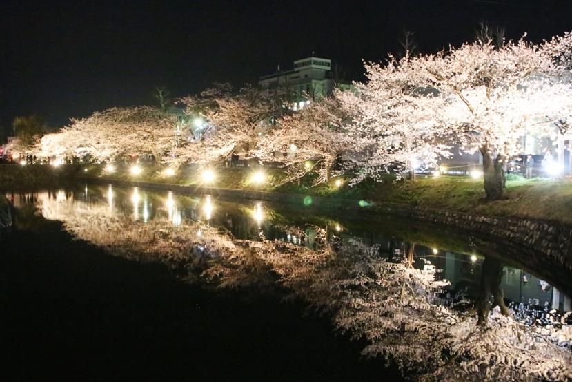 20130407桜1