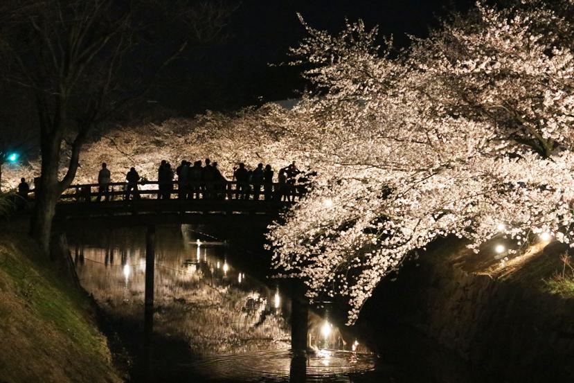 20130407桜2
