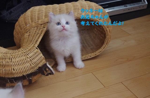 くっきーIMGP3896