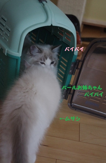 ムサシIMGP4748