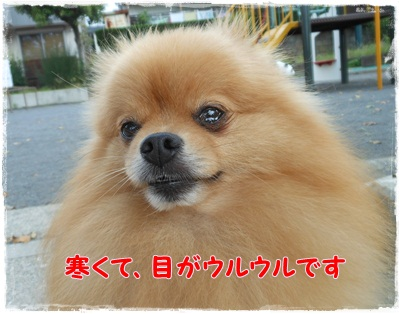 DSCN2093_20130104220123.jpg