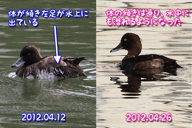 20120426kinkuro03.jpg