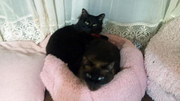 20120429cats.jpg