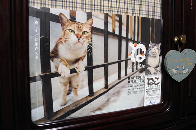 20120507neko.jpg