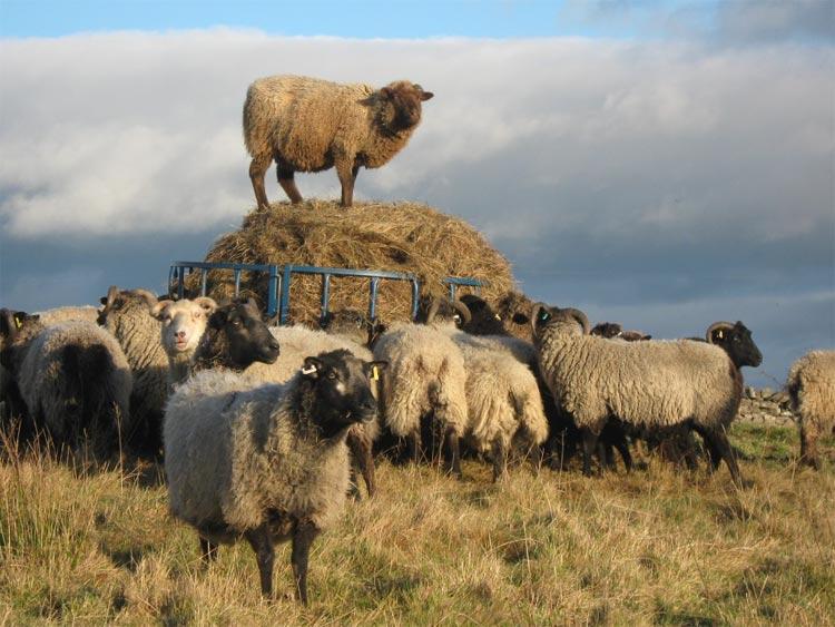 british-wool-1024x768.jpg