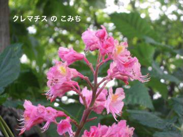 IMGP6109_convert_20120526230625.jpg