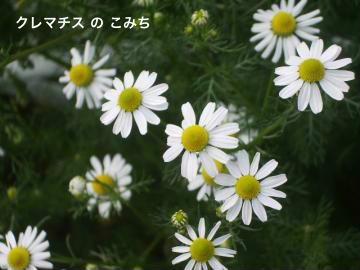 IMGP6157_convert_20120601142349.jpg