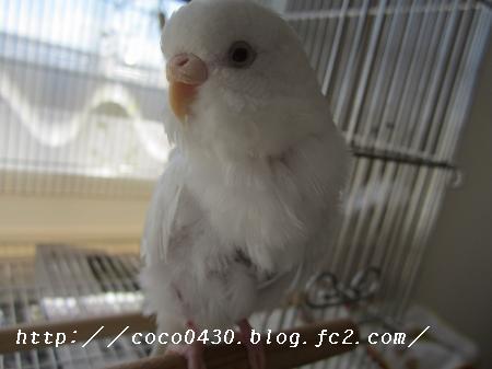 IMG_0014_convert_20141103080851.jpg