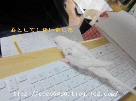 IMG_0034_convert_20141128101926.jpg