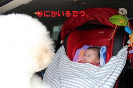 ココと赤ちゃん。