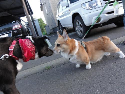 モカちゃん&ピエロ