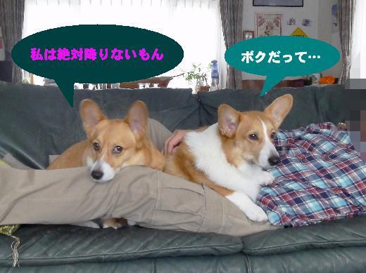 4-1_20130109120228.jpg
