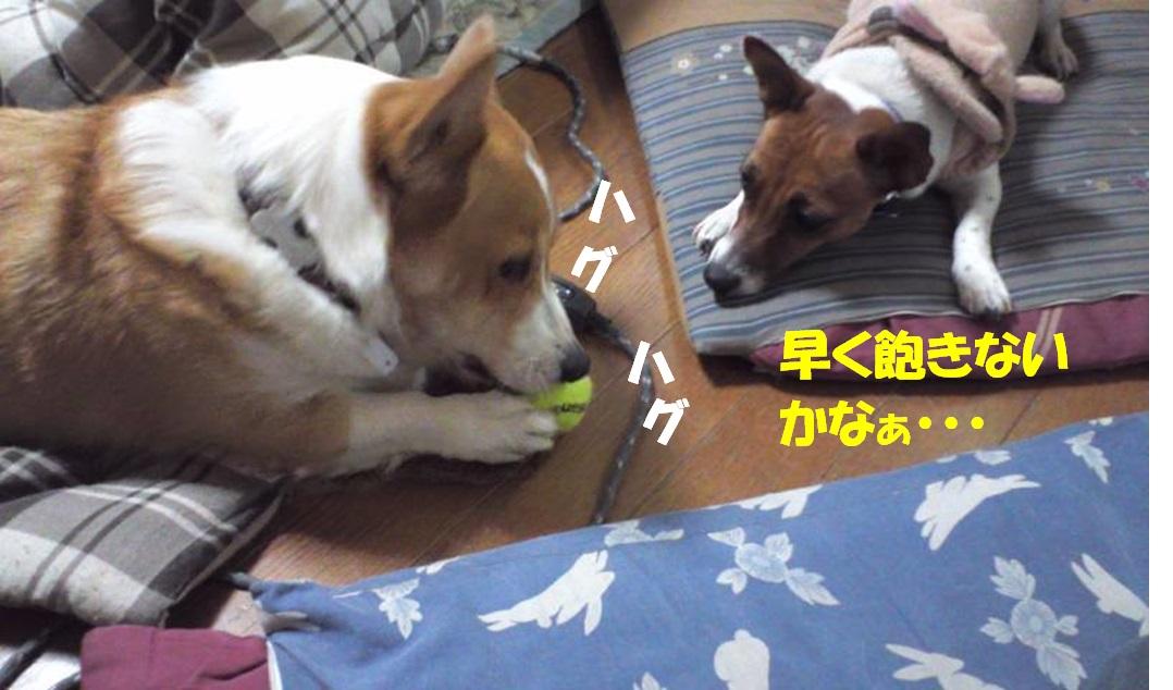20130118063919597.jpg