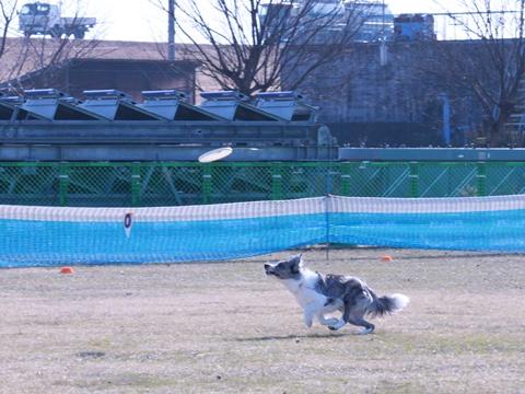 20130119-K9木曽三川カルチャービレッジ 389-003