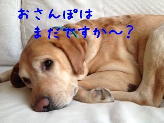 1_20121225150348.jpg