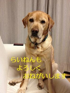 1_20121229122228.jpg