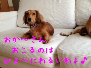 2_20121114142929.jpg